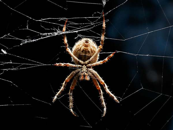 perierga.gr - 10 πράγματα που δεν ξέρετε για τις αράχνες!
