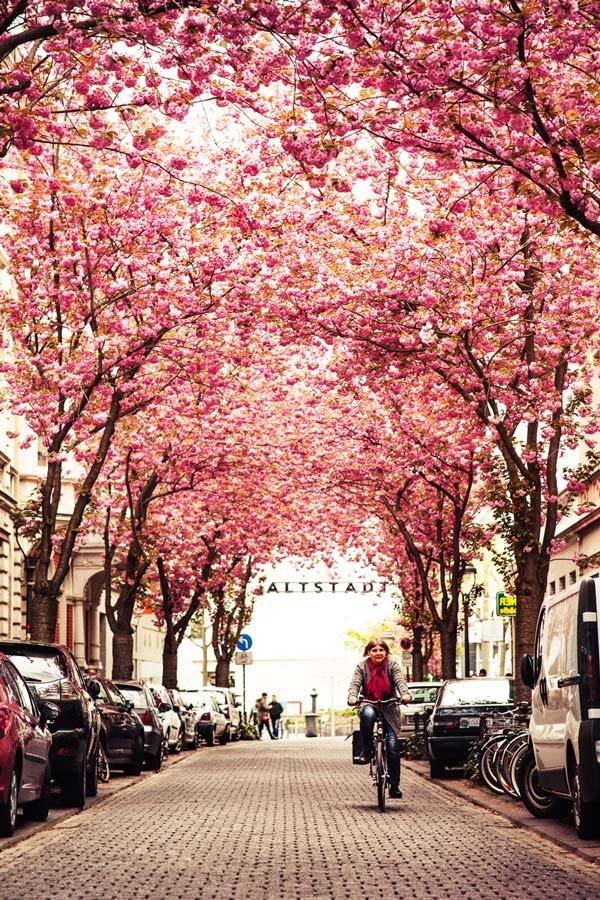perierga.gr - Ένας ανθισμένος δρόμος στο κέντρο της πόλης!