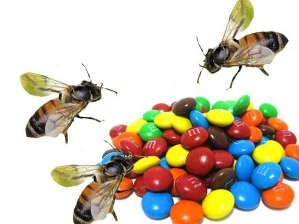 perierga.gr - Μέλισσες παρήγαγαν χρωματιστό μέλι!