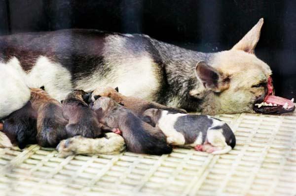 perierga.gr - Ένας σκύλος-ήρωας!