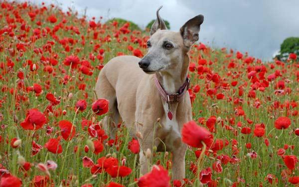 perierga.gr - 4η Οκτωβρίου: Παγκόσμια Ημέρα των Ζώων