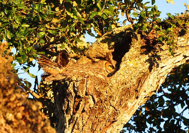 perierga.gr - Τεστ παρατηρητικότητας: Βρες την κουκουβάγια!
