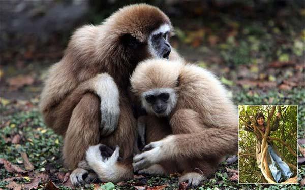 """perierga.gr - """"Με μεγάλωσαν πίθηκοι στη ζούγκλα...""""!"""