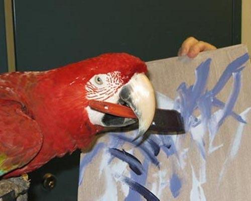 perierga.gr - 10 ζώα που ζωγραφίζουν!