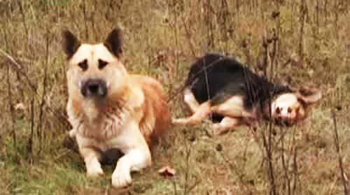 """perierga.gr - Σκύλος αρνείται να αποχωριστεί τη νεκρή """"σύντροφό"""" του!"""