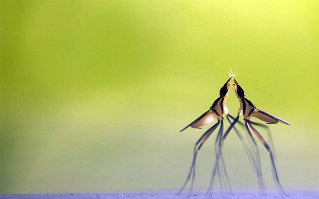 Perierga.gr - H μαγεία του ζωικού βασιλείου σε φωτογραφίες!