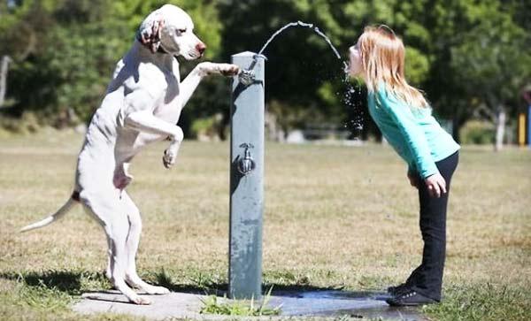 perierga.gr - Γιατί ένας σκύλος είναι πάντα απαραίτητος;