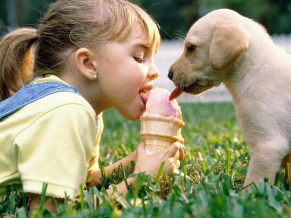 perierga.gr - Λαχταριστό παγωτό για... σκύλους!