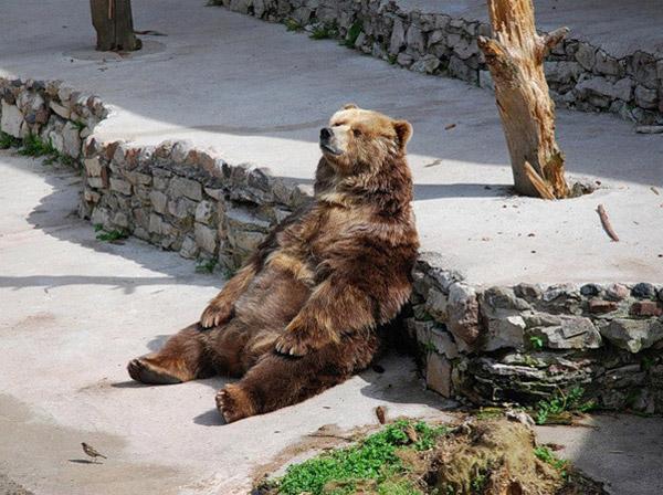 """perierga.gr - Όταν τα ζώα """"αράζουν"""" σαν άνθρωποι!"""