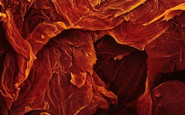 perierga.gr- Τα φαγητά φωτογραφίζονται στο μικροσκόπιο!