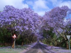 Τα ομορφότερα τούνελ δέντρων στον κόσμο!