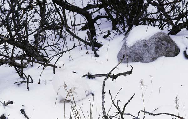 perierga.gr - Μπορείτε να βρείτε το... κρυμμένο ζώο;