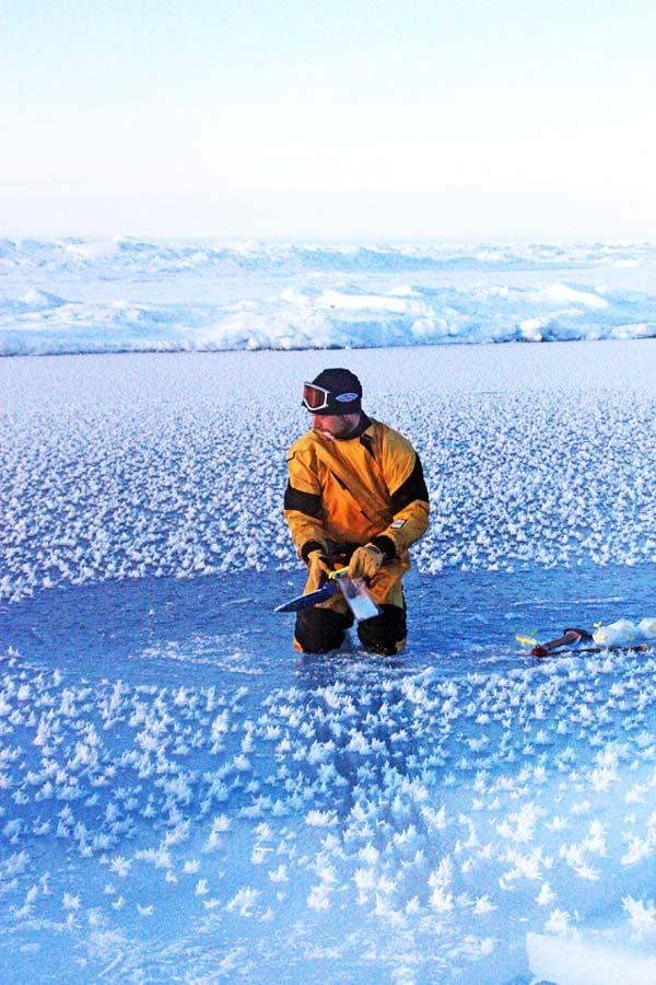 """perierga.gr - Εντυπωσιακά """"παγωμένα λουλούδια"""" στον Αρκτικό ωκεανό!"""