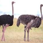 perierga.gr - 20+1 πράγματα που δεν ξέρετε για τα ζώα!