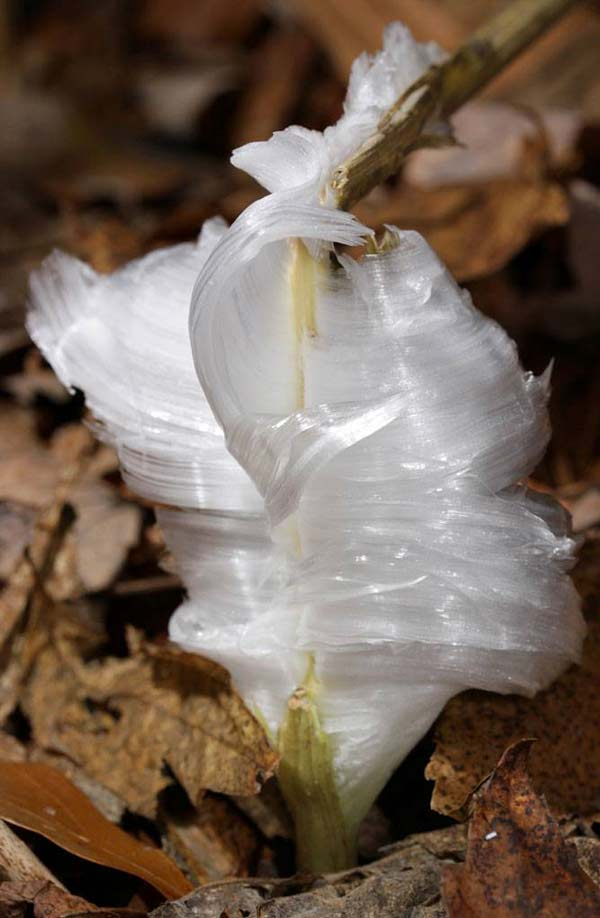 "perierga.gr - Σπάνια παγωμένα ""λουλούδια""!"