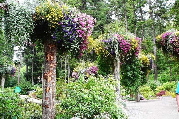 perierga.gr - Glacier Gardens: Ένας κήπος με ανάποδα δέντρα!