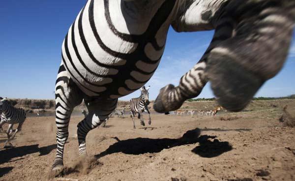 perierga.gr - Απίστευτες εικόνες της άγριας φύσης από πολύ κοντά!