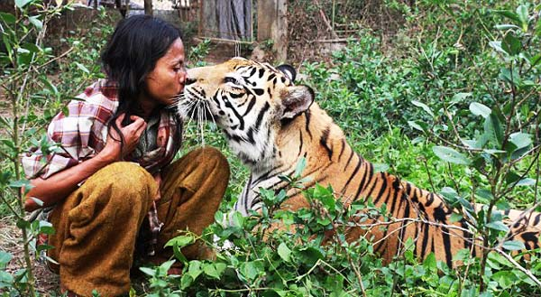 perierga.gr - Ένας σύγχρονος Μόγλης παρέα με την... τίγρη του!