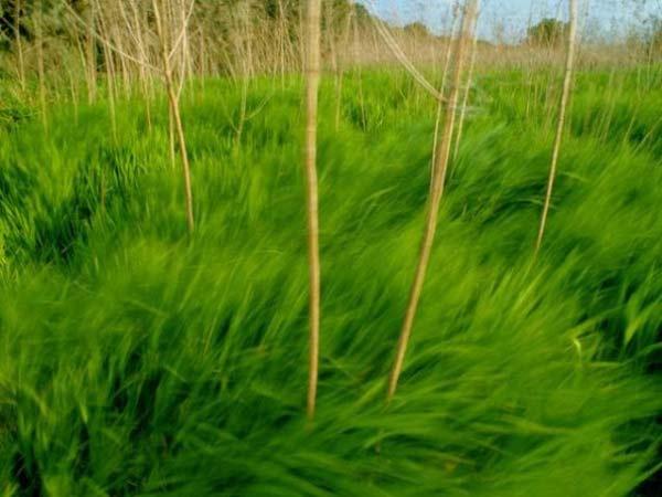perierga.gr - Οι αποχρώσεις του πράσινου!