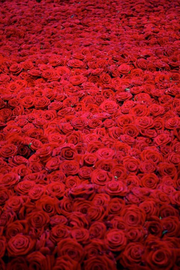 perierga.gr - Η ζωή και ο θάνατος 10.000 τριαντάφυλλων!