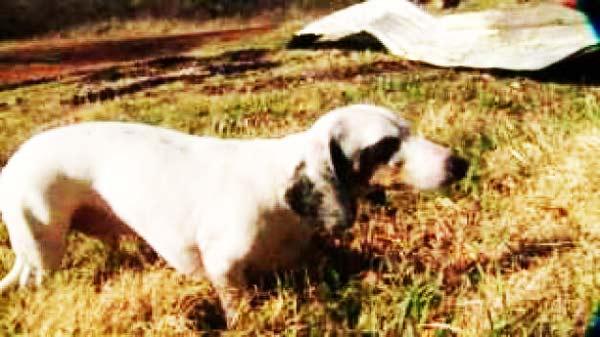 perierga.gr - Ανάπηρη σκυλίτσα σώζει την οικογένειά της από τις φλόγες!