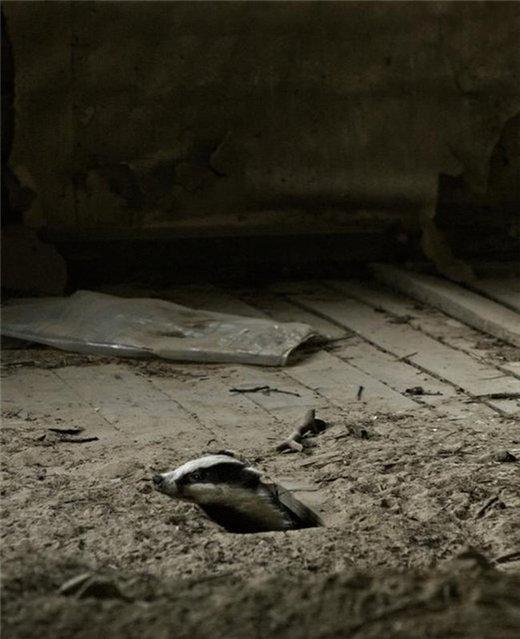 perierga.gr - Παράξενοι επισκέπτες σε ερειπωμένα σπίτια!