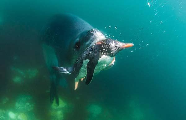 perierga.gr - Κολυμπώντας στα... σαγόνια του θανάτου!