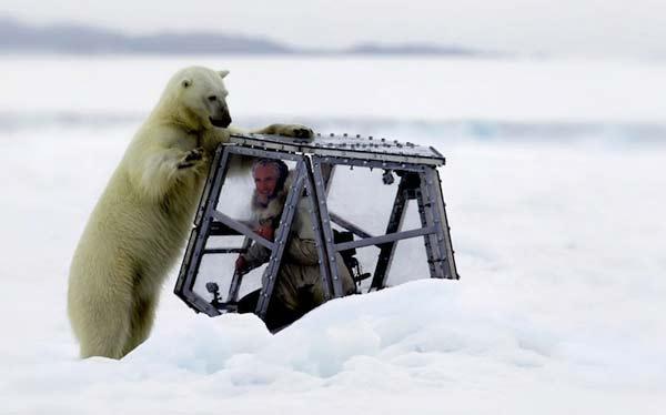 perierga.gr - Καμεραμάν τετ-α-τετ με πολική αρκούδα!