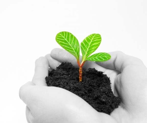 perierga.gr - Η μαγεία της αναγέννησης ενός φυτού!