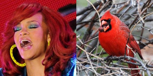 perierga.gr - Γνωστοί pop stars παρομοιάζονται με πτηνά!