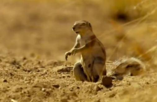 Perierga.gr - Σκίουρος αντικρίζει λεοπάρδαλη...