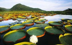 perierga.gr - 10 θαυμαστοί υδροβιότοποι του πλανήτη!