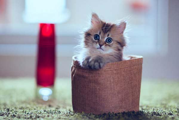 perierga.gr - Η πιο χαριτωμένη γάτα του Διαδικτύου!