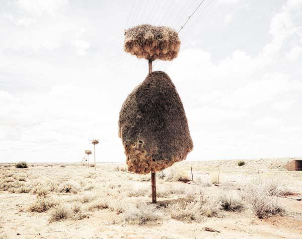 perierga.gr - Η μεγαλύτερη φωλιά πτηνού στον κόσμο!