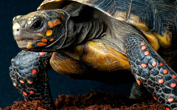 perierga.gr - Χελώνα επιβίωσε μετά από 30 χρόνια ξεχασμένη σε αποθήκη!!!