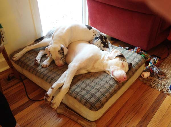 perierga.gr - Τυφλός & κουφός σκύλος είναι αχώριστοι!