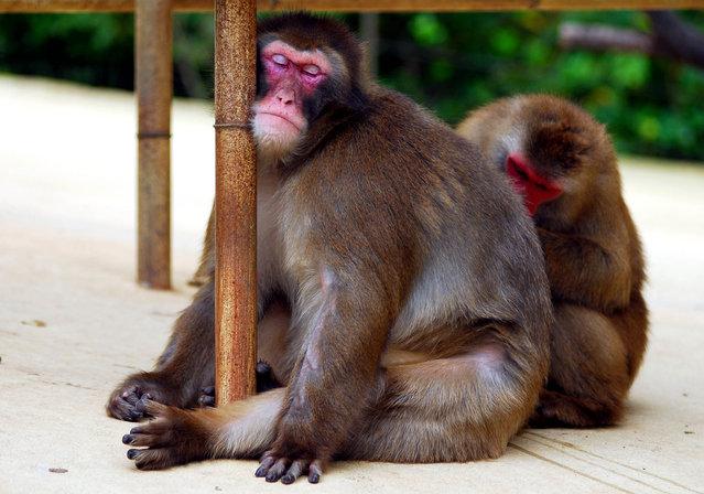 perierga.gr - Τα ζώα ειδικεύονται στην... τέχνη του ύπνου!