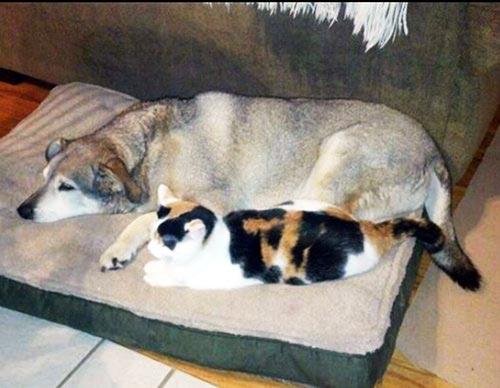 perierga.gr - Γάτα απαλύνει τον πόνο ενός γέρικου σκύλου!