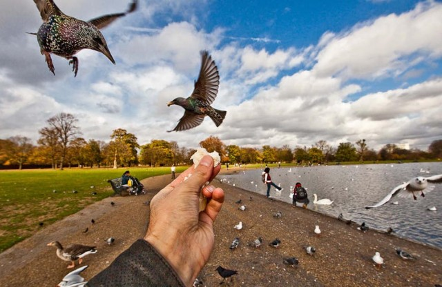 perierga.gr - Όταν τα πουλιά τρώνε από το χέρι του φωτογράφου...