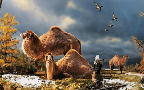 Perierga.gr - Γιγάντιες καμήλες ζούσαν στην Αρκτική!