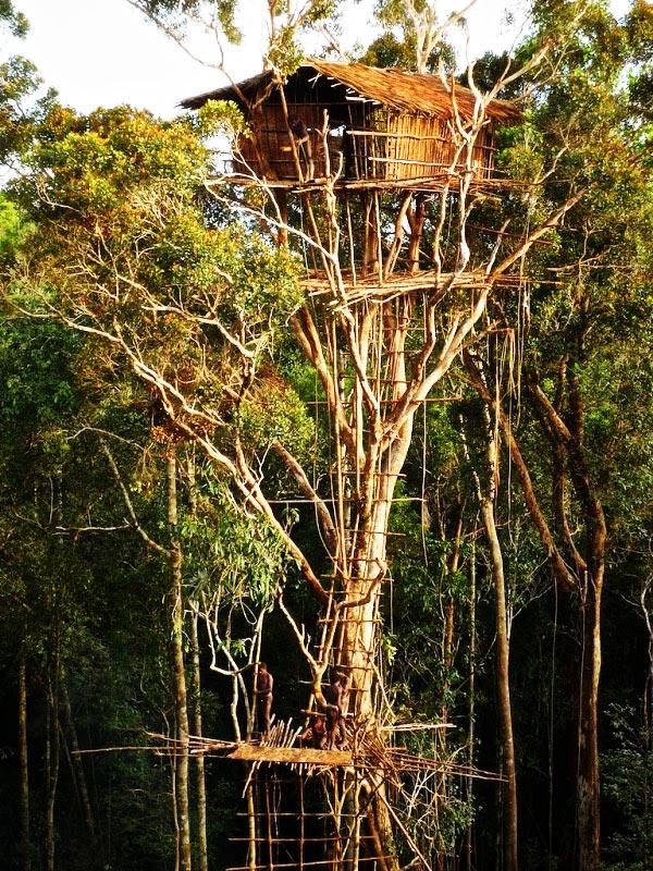 perierga.gr - Korowai: Ένα ολόκληρο χωριό πάνω στα δέντρα!