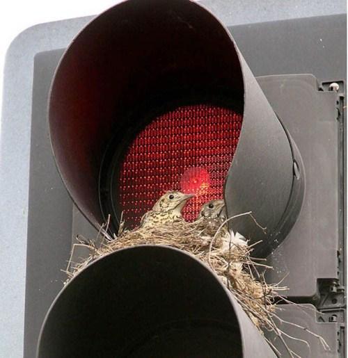 perierga.gr - Τα πουλιά χτίζουν τις φωλιές τους σε απίθανα μέρη!