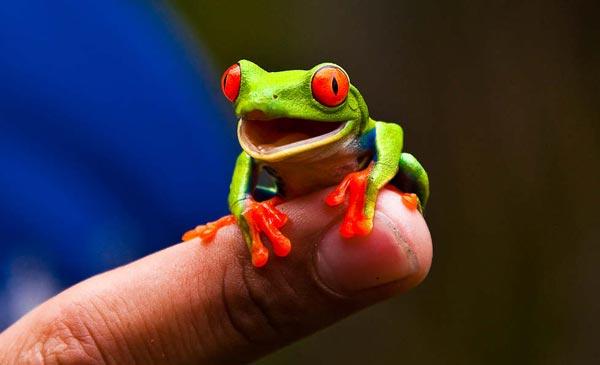 "perierga.gr - Ο βάτραχος ""γελωτοποιός""!"