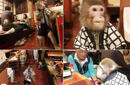 perierga.gr - Σερβιτόροι... μαϊμούδες κλέβουν την παράσταση!