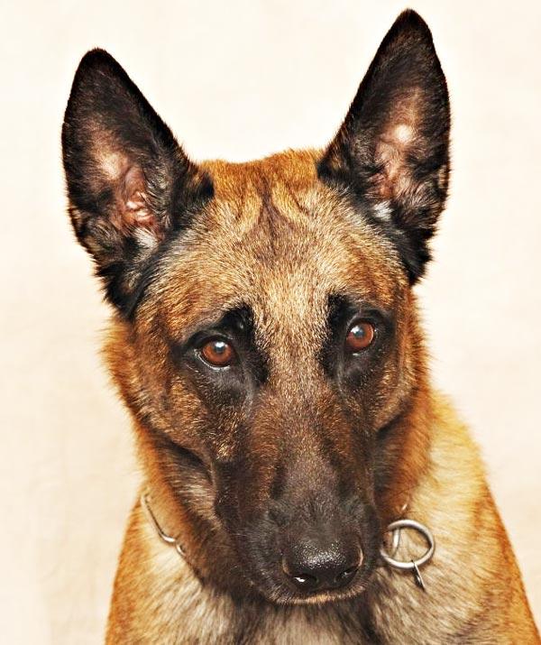 perierga.gr - Αναγνωρίζοντας τα συναισθήματα των σκύλων!