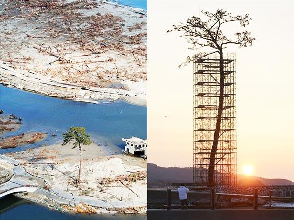 perierga.gr - Το τελευταίο δέντρο από το ιαπωνικό τσουνάμι γίνεται μνημείο!