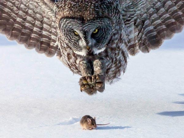 perierga.gr - Άγρια ζώα συλλαμβάνουν το... γεύμα τους!