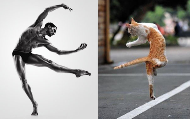 perierga.gr - Απίθανες γάτες ποζάρουν σαν... άντρες!