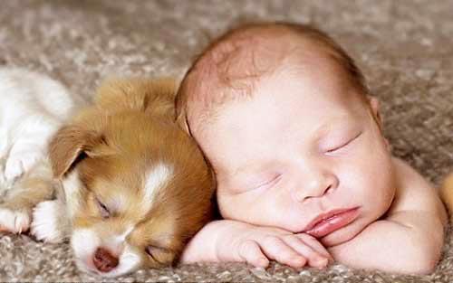 perierga.gr - Γεμάτα βακτήρια τα σπίτια με σκύλους - Τα πλεονεκτήματα!