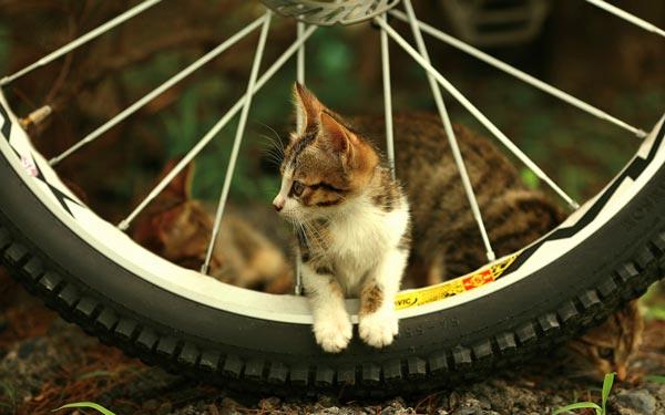 perierga.gr - Ποδηλάτης προπονείται με τη γάτα του στον ώμο!